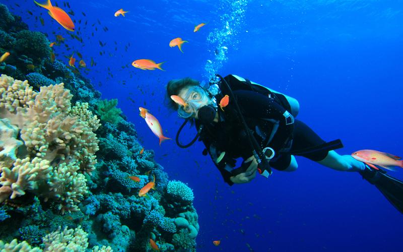 Spot Diving di Indonesia untuk Liburan Serumu - Karimun Jawa