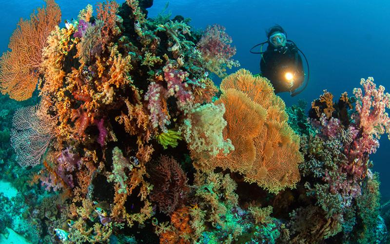 Spot Diving di Indonesia untuk Liburan Serumu - Wakatobi