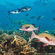 spot diving