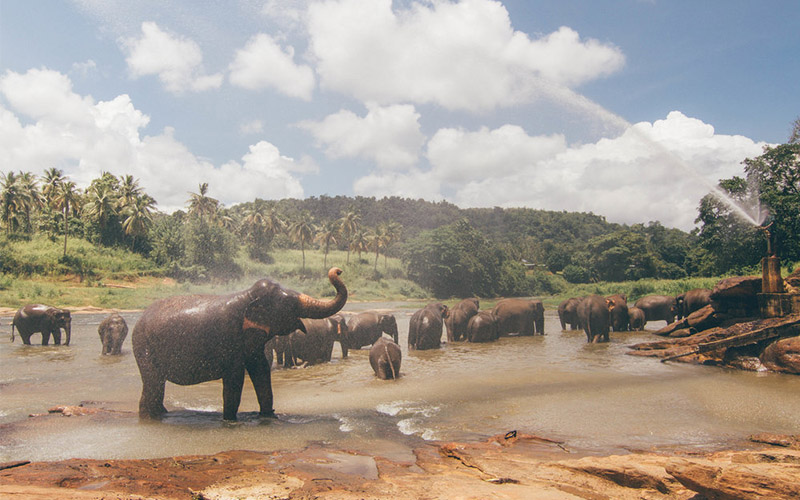 Taman Nasional Kaudulla