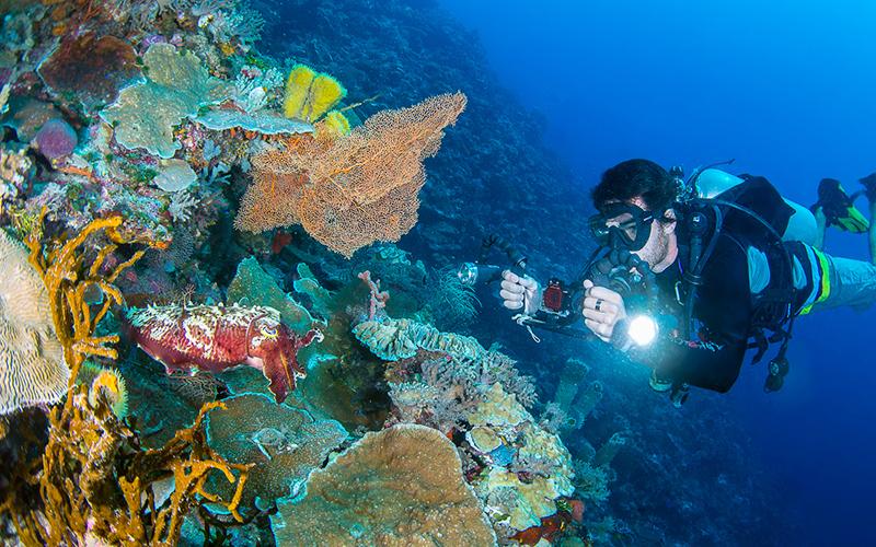 November: Menyelami Lautan Wakatobi
