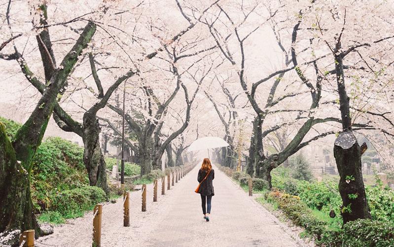 Bucket List April: Melihat Bunga Sakura Mekar di Osaka