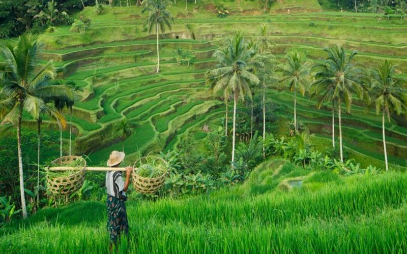 Fakta Pariwisata Indonesia